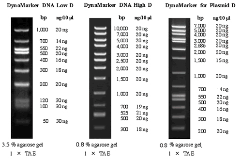10 Bp Dna Ladder Thermo Scientific O Generuler 1 Kb Dna